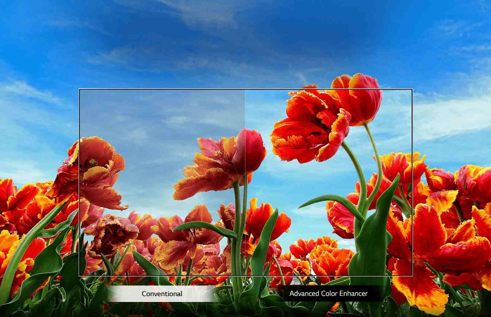 LG Smart LED TV dynamic color